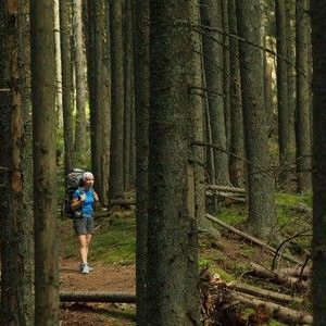 Could you survive being lost in the woods?